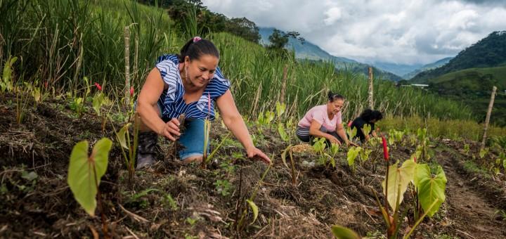 Socio-Economic Impact of COVID-19 in Colombia