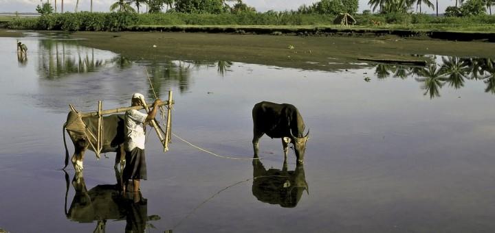 Indonesia's Green Sukuk: 2019 Report
